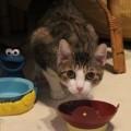 unsere Patenkatzen warten auf Besuch