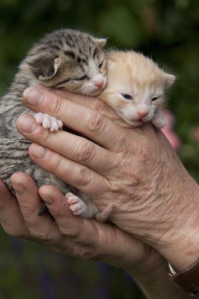 Katzenkind2