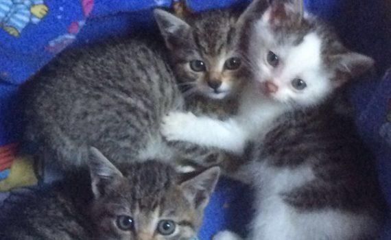 Katzenkindealle1